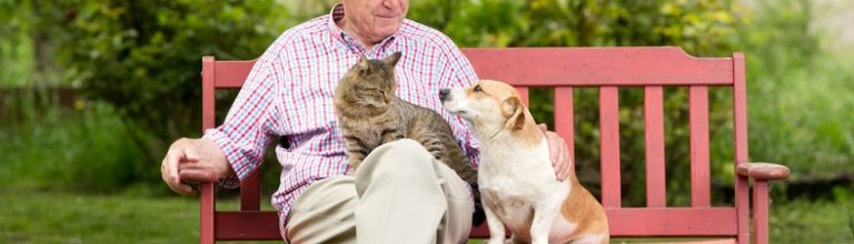 Three Reasons Your Senior Loved One Needs a Pet