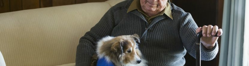 Ways Animals Benefit The Elderly