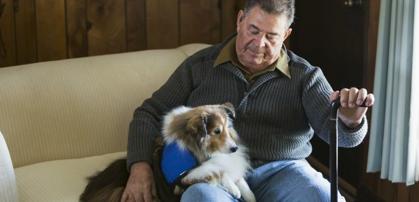 Ways Animals Benefit The Elderly