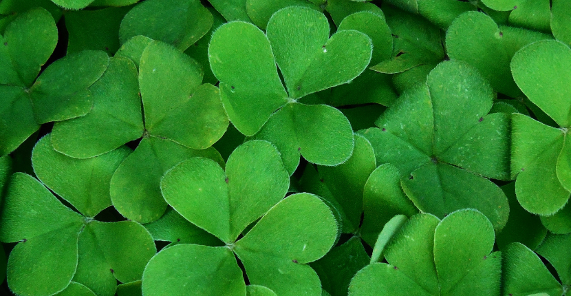 St. Patrick's Day Traditions Sure to Bring You Luck