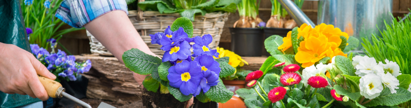 The Mental Health Benefits of Gardening