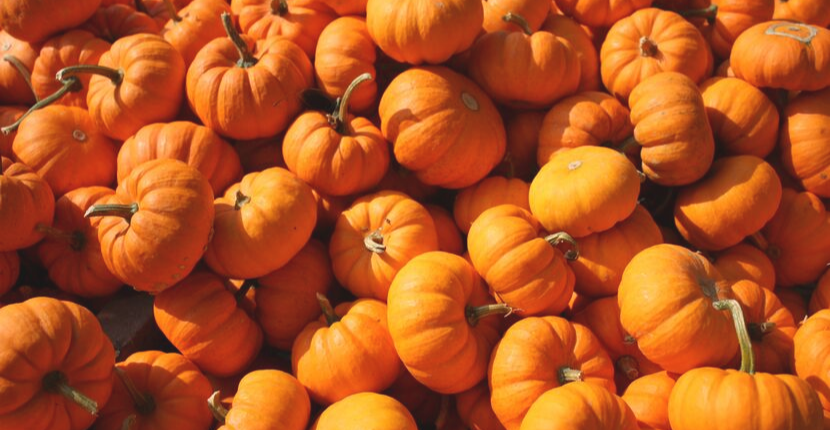 The 6 Benefits of Pumpkin