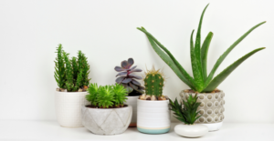 Health Benefits of Houseplants
